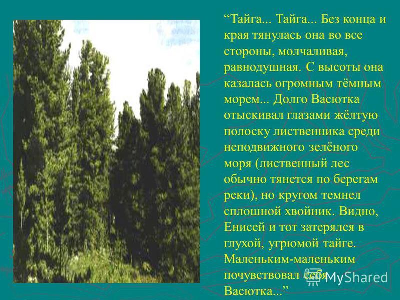 Тайга... Тайга... Без конца и края тянулась она во все стороны, молчаливая, равнодушная. С высоты она казалась огромным тёмным морем... Долго Васютка отыскивал глазами жёлтую полоску лиственница среди неподвижного зелёного моря (лиственный лес обычно