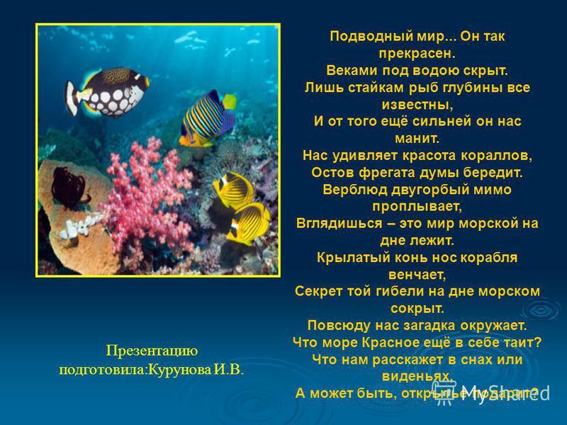 Презентацию подготовила:Курунова И.В. Подводный мир... Он так прекрасен. Веками под водою скрыт. Лишь стайкам рыб глубины все известны, И от того ещё сильней он нас манит. Нас удивляет красота кораллов, Остов фрегата думы бередит. Верблюд двугорбый м