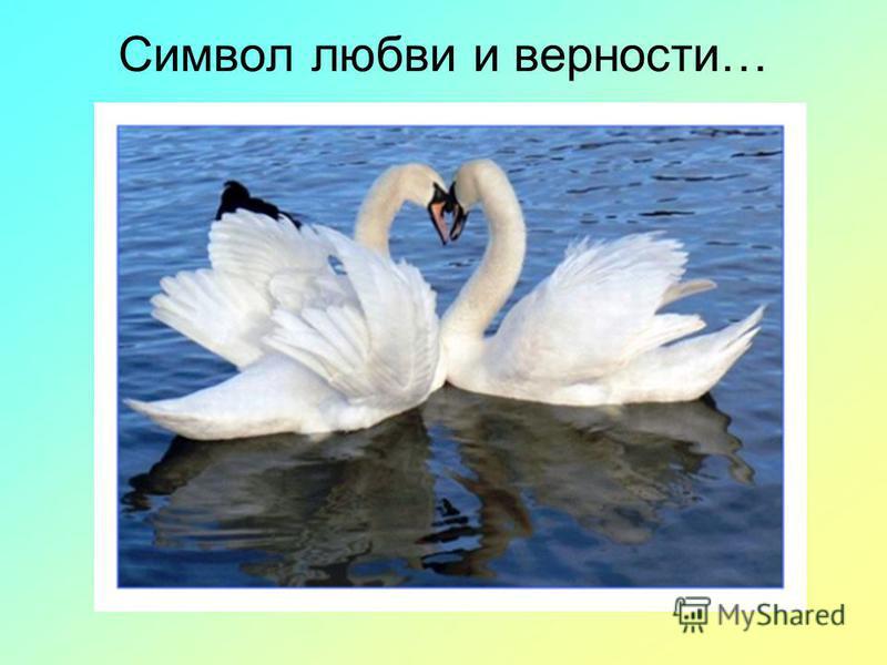Символ любви и верности…