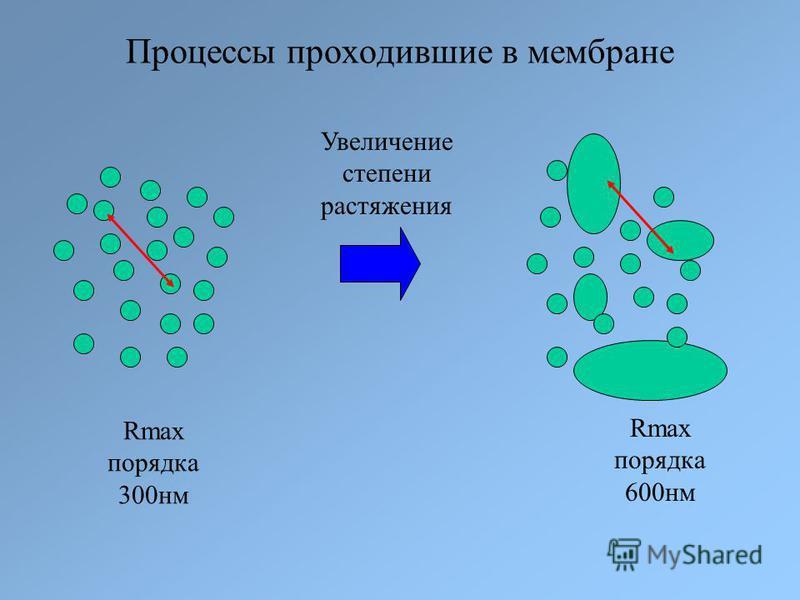Процессы проходившие в мембране Увеличение степени растяжения Rmax порядка 300 нм Rmax порядка 600 нм