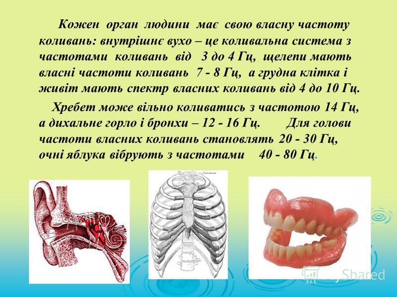 Кожен орган людини має свою власну частоту коливань: внутрішнє вухо – це коливальна система з частотами коливань від 3 до 4 Гц, щелепи мають власні частоти коливань 7 - 8 Гц, а грудна клітка і живіт мають спектр власних коливань від 4 до 10 Гц. Хребе