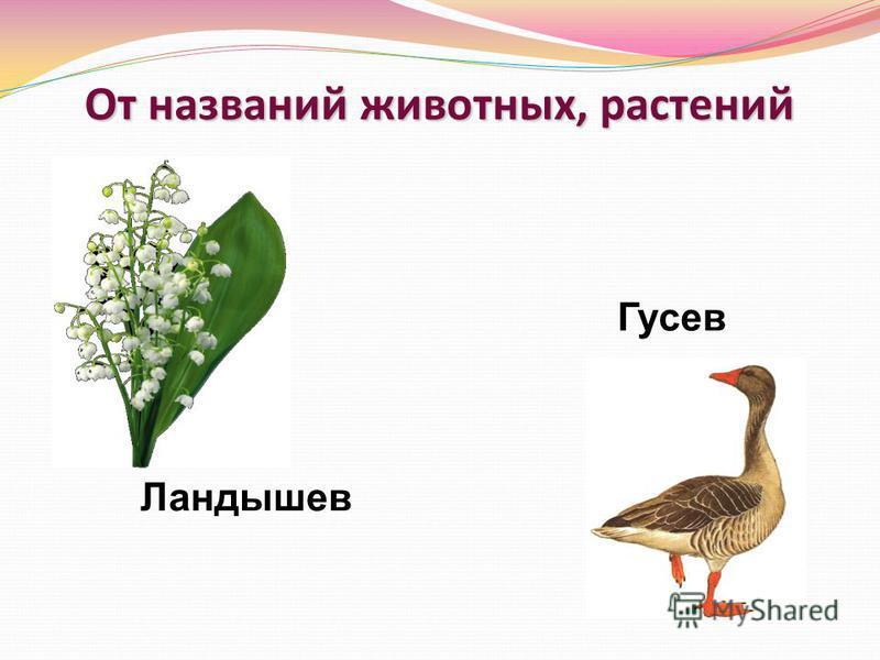 От названий животных, растений Ландышев Гусев
