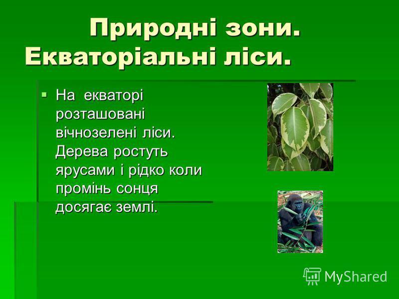 Природні зони. Екваторіальні ліси. Природні зони. Екваторіальні ліси. На екваторі розташовані вічнозелені ліси. Дерева ростуть ярусами і рідко коли промінь сонця досягає землі. На екваторі розташовані вічнозелені ліси. Дерева ростуть ярусами і рідко