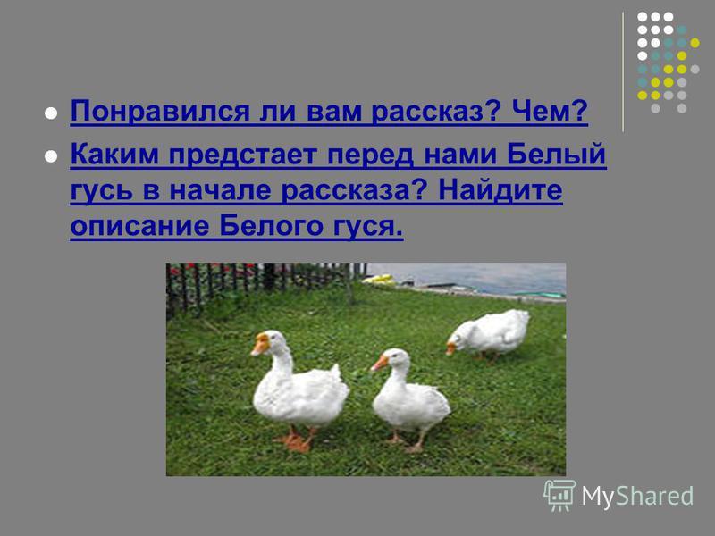 Понравился ли вам рассказ? Чем? Каким предстает перед нами Белый гусь в начале рассказа? Найдите описание Белого гуся.