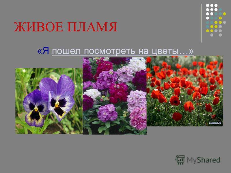 ЖИВОЕ ПЛАМЯ «Я пошел посмотреть на цветы…»пошел посмотреть на цветы…»