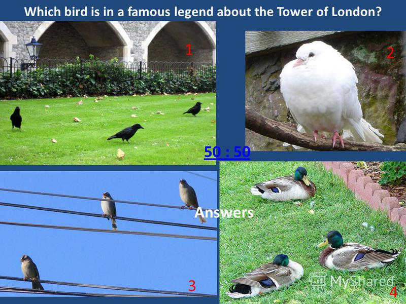 Which bird is in a famous legend about the Tower of London? 1 3 2 4 50 : 50 The raven The dove The sparrowThe duck Answers