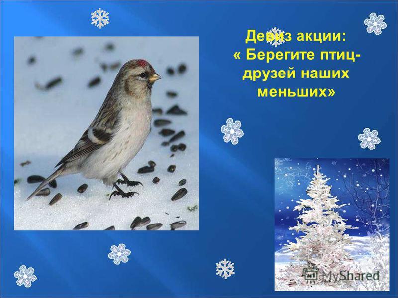 Девиз акции: « Берегите птиц- друзей наших меньших»