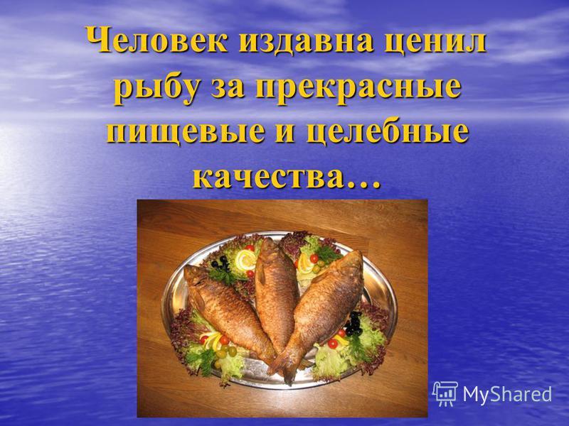 Человек издавна ценил рыбу за прекрасные пищевые и целебные качества… Человек издавна ценил рыбу за прекрасные пищевые и целебные качества…