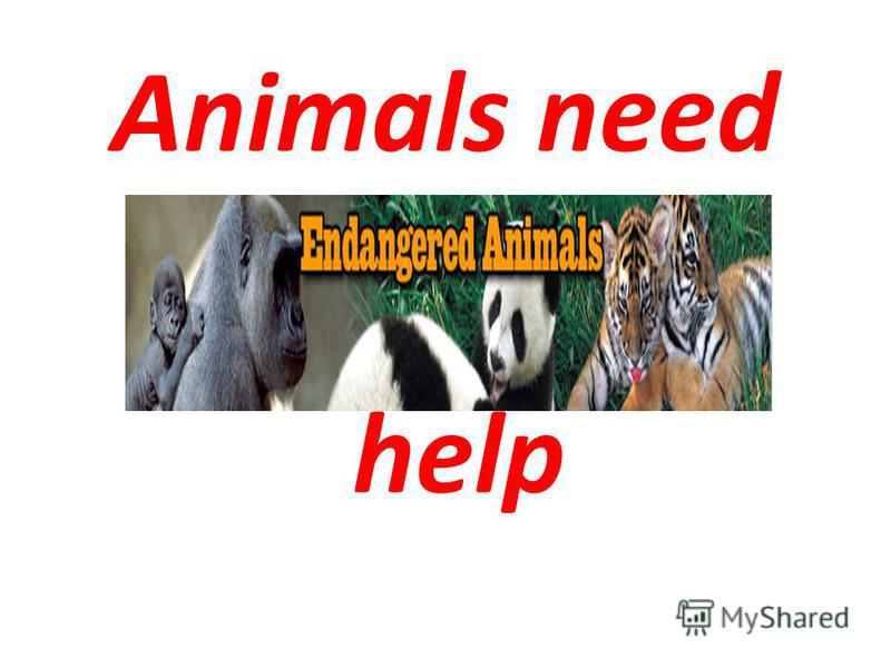 Animals need help
