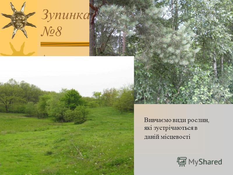 Зупинка 8 Вивчаємо види рослин, які зустрічаються в даній місцевості