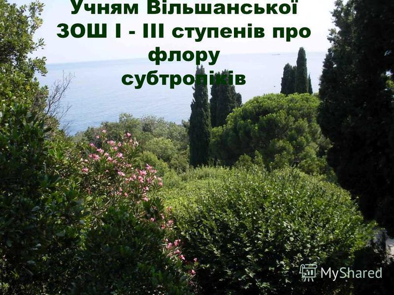 Учням Вільшанської ЗОШ І - ІІІ ступенів про флору субтропіків