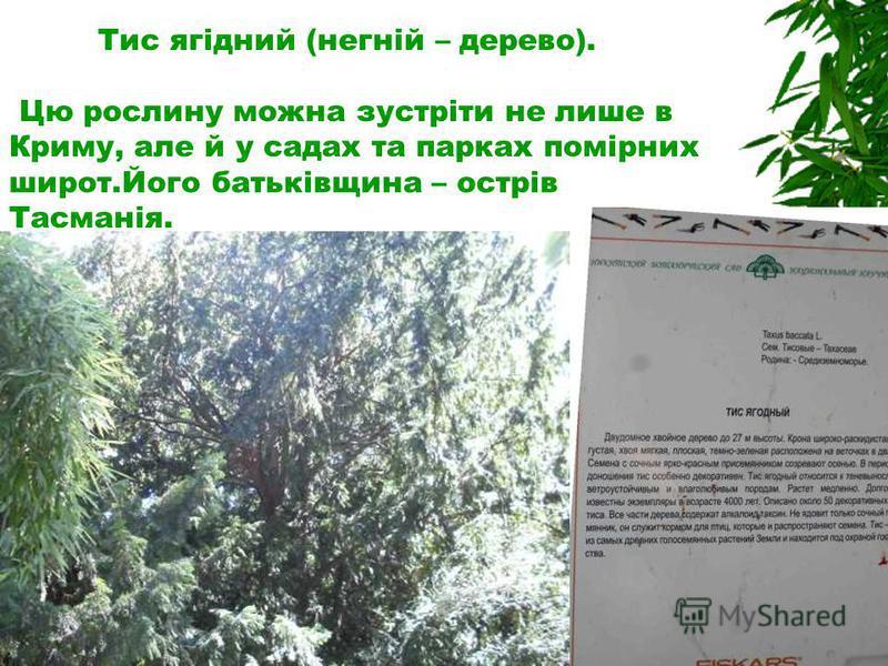 Тис ягідний (негній – дерево). Цю рослину можна зустріти не лише в Криму, але й у садах та парках помірних широт.Його батьківщина – острів Тасманія.