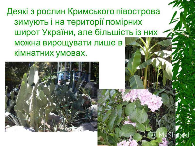 Деякі з рослин Кримського півострова зимують і на території помірних широт України, але більшість із них можна вирощувати лише в кімнатних умовах.