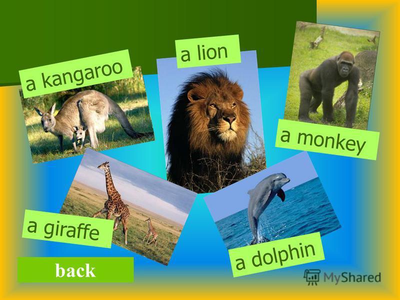 back a kangaroo a dolphin a giraffe a monkey a lion