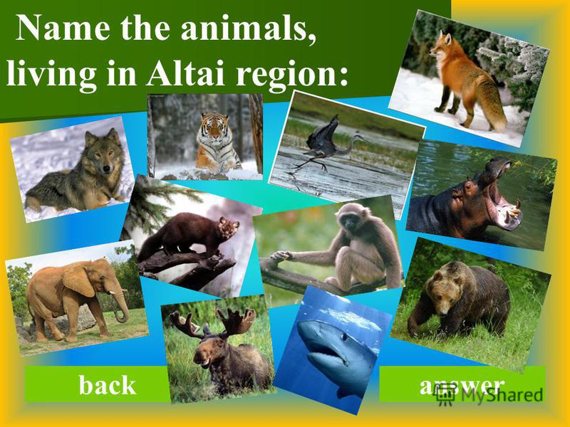 backanswer Name the animals, living in Altai region: