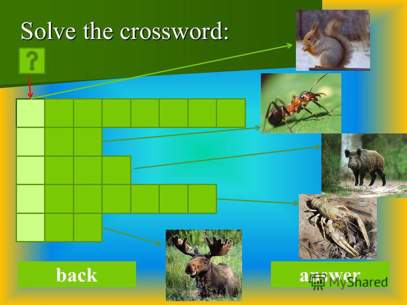 Solve the crossword: backanswer