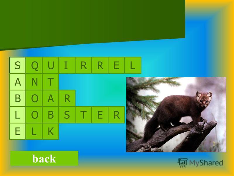 back S A B L E Q U I R R E L N O R A O T L R E T S K B