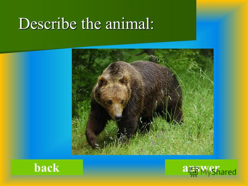 Describe the animal: Describe the animal: backanswer
