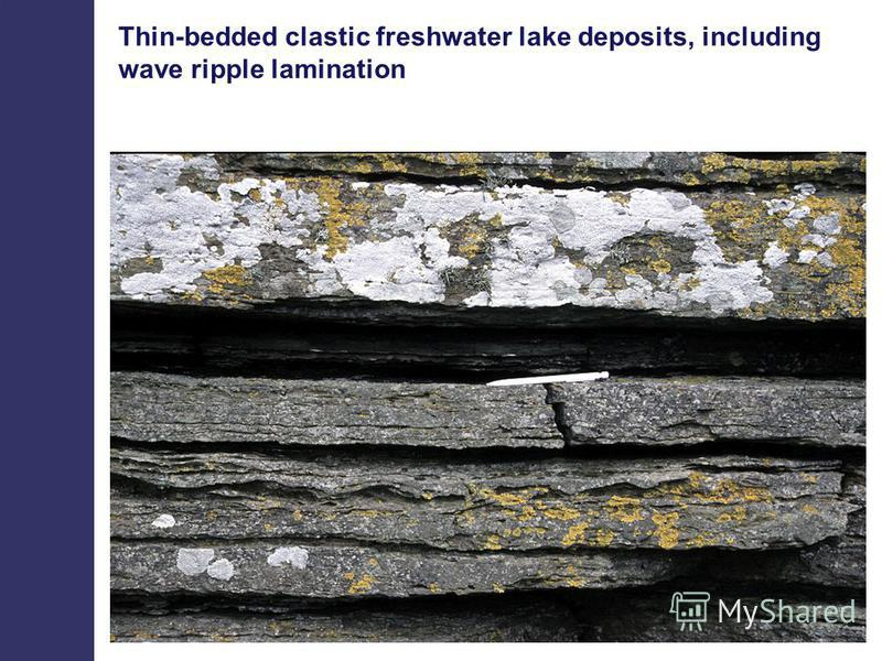 Thin-bedded clastic freshwater lake deposits, including wave ripple lamination