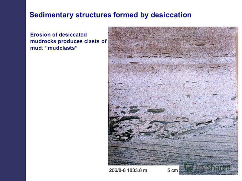 Erosion of desiccated mudrocks produces clasts of mud: mudclasts Sedimentary structures formed by desiccation