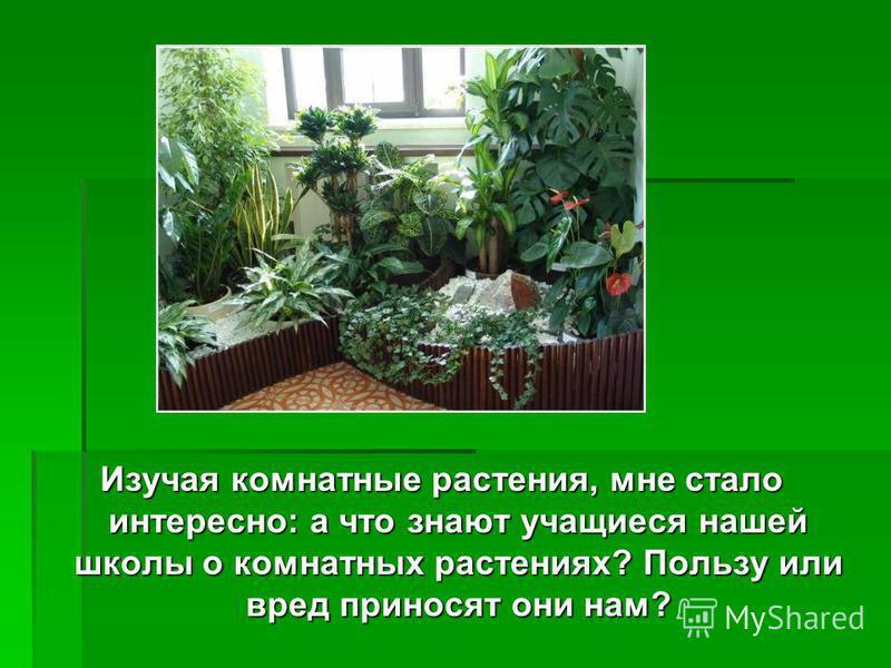 Изучая комнатные растения, мне стало интересно: а что знают учащиеся нашей школы о комнатных растениях? Пользу или вред приносят они нам?