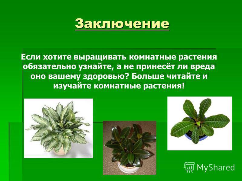 Заключение Если хотите выращивать комнатные растения обязательно узнайте, а не принесёт ли вреда оно вашему здоровью? Больше читайте и изучайте комнатные растения!