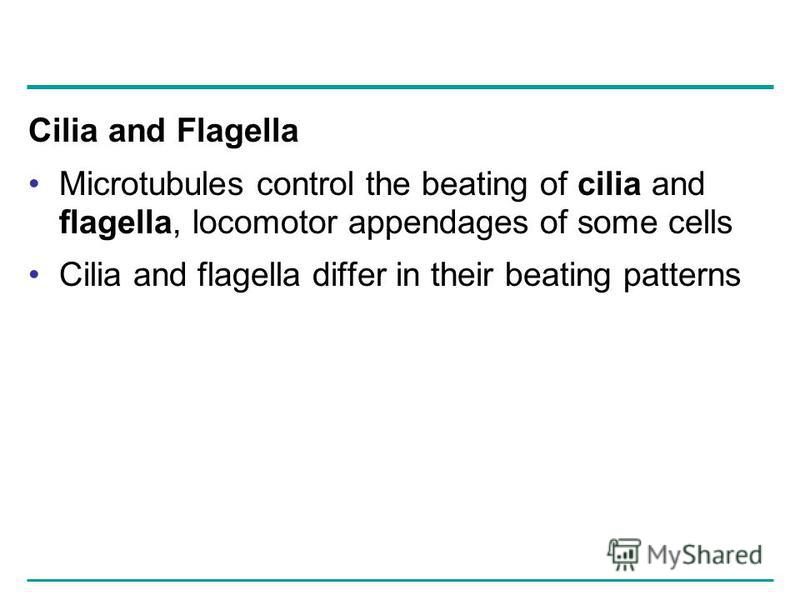 Cilia and Flagella Microtubules control the beating of cilia and flagella, locomotor appendages of some cells Cilia and flagella differ in their beating patterns