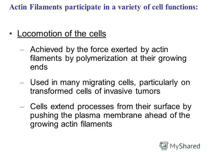 Locomotion of the cells – Achieved by the force exerted by actin filaments by polymerization at their growing ends – Used in many migrating cells, particularly on transformed cells of invasive tumors – Cells extend processes from their surface by pus