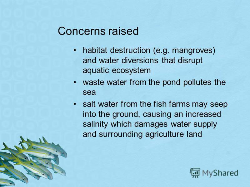 Concerns raised habitat destruction (e.g. mangroves) and water diversions that disrupt aquatic ecosystem waste water from the pond pollutes the sea salt water from the fish farms may seep into the ground, causing an increased salinity which damages w