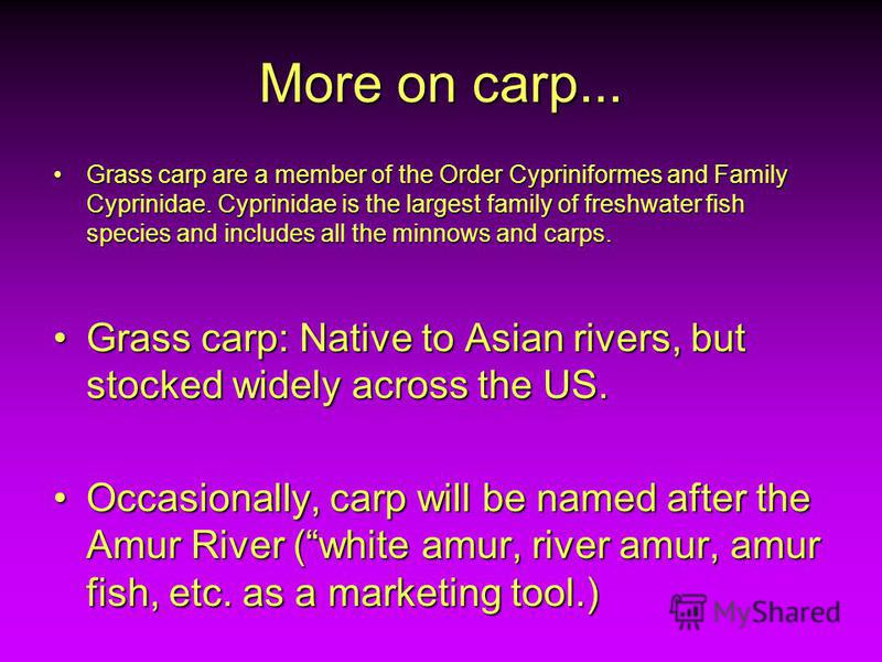More on carp... Grass carp are a member of the Order Cypriniformes and Family Cyprinidae. Cyprinidae is the largest family of freshwater fish species and includes all the minnows and carps.Grass carp are a member of the Order Cypriniformes and Family