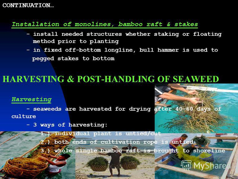 PREPARATION OF MATERIALS & SEAWEED PLOT Preparation of planting materials 1.) Cultivation Rope – monofilament #110 test lbs, polyethylene rope (PER #6-7), flat binder 2.) Tying Matls – soft plastic rope (tie-tie), monofilament #160 test lbs 3.) Suppo