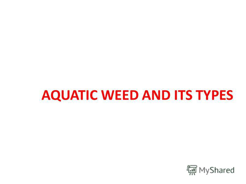 AQUATIC WEED AND ITS TYPES