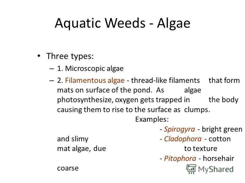 Aquatic Weeds - Algae Three types: – 1. Microscopic algae – 2. Filamentous algae - thread-like filaments that form mats on surface of the pond. As algae photosynthesize, oxygen gets trapped in the body causing them to rise to the surface as clumps. E
