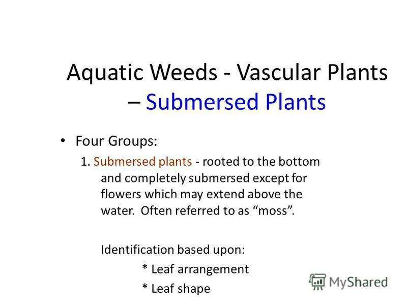 Aquatic Weeds - Vascular Plants – Submersed Plants Four Groups: 1. Submersed plants - rooted to the bottom and completely submersed except for flowers which may extend above the water. Often referred to as moss. Identification based upon: * Leaf arra
