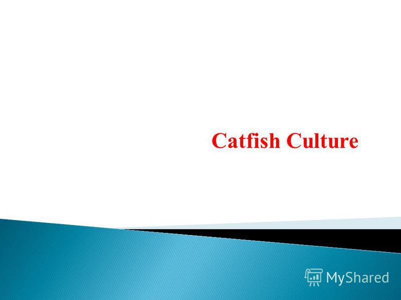 Catfish Culture