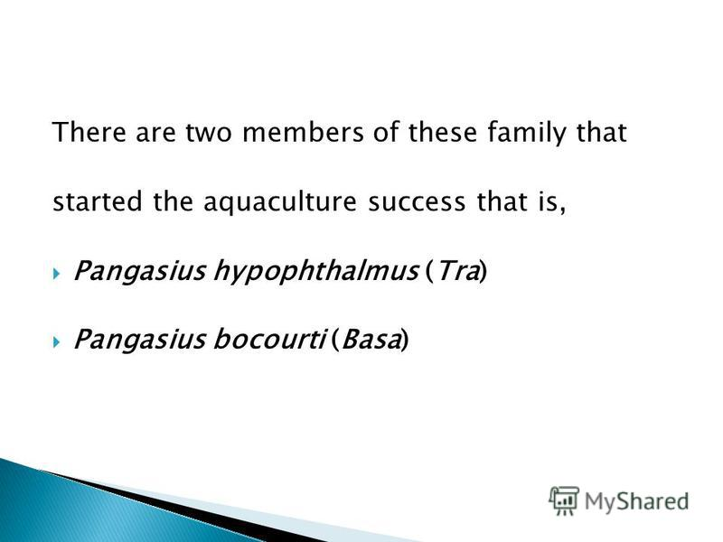 There are two members of these family that started the aquaculture success that is, Pangasius hypophthalmus (Tra) Pangasius bocourti (Basa)