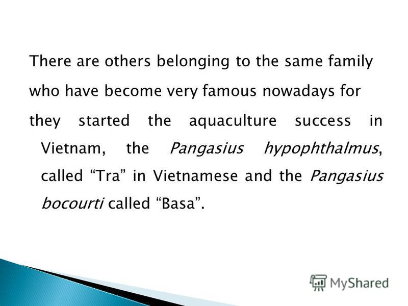 There are others belonging to the same family who have become very famous nowadays for they started the aquaculture success in Vietnam, the Pangasius hypophthalmus, called Tra in Vietnamese and the Pangasius bocourti called Basa.