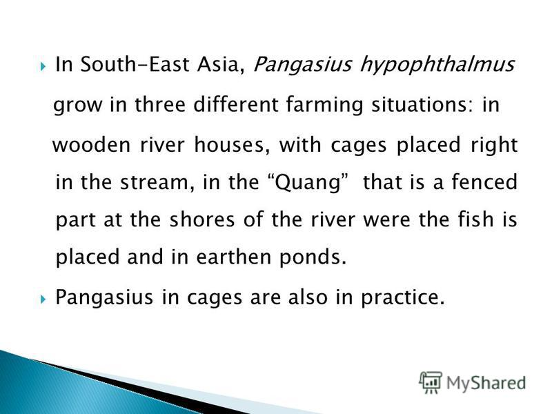 In South-East Asia, Pangasius hypophthalmus grow in three different farming situations: in wooden river houses, with cages placed right in the stream, in the Quang that is a fenced part at the shores of the river were the fish is placed and in earthe