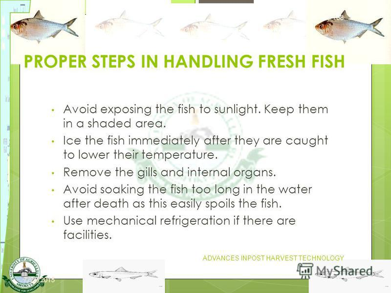 13 PROPER STEPS IN HANDLING FRESH FISH Avoid exposing the fish to sunlight. Keep them in a shaded area. Ice the fish immediately after they are caught to lower their temperature. Remove the gills and internal organs. Avoid soaking the fish too long i