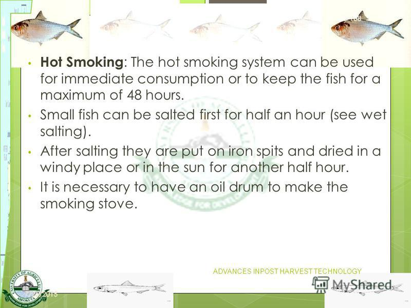 19 Hot Smoking : The hot smoking system can be used for immediate consumption or to keep the fish for a maximum of 48 hours. Small fish can be salted first for half an hour (see wet salting). After salting they are put on iron spits and dried in a wi
