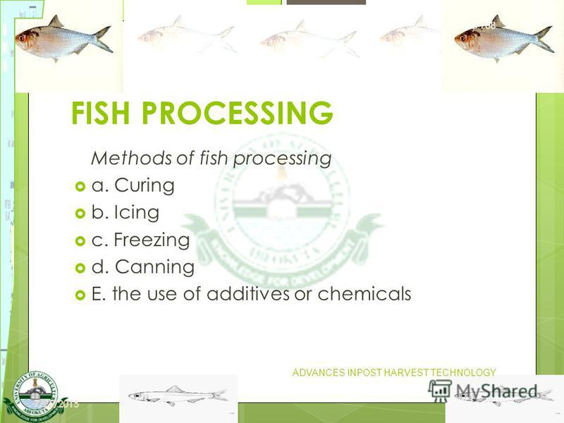 22 FISH PROCESSING Methods of fish processing a. Curing b. Icing c. Freezing d. Canning E. the use of additives or chemicals FIS 708 ADVANCES INPOST HARVEST TECHNOLOGY