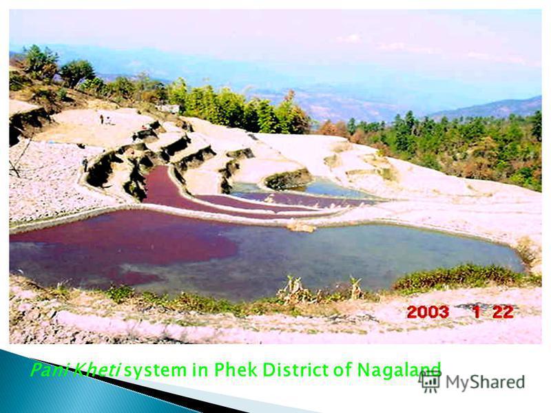 Pani Kheti system in Phek District of Nagaland