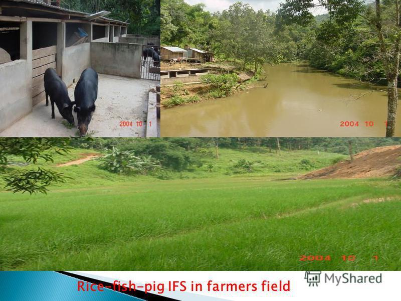 Rice-fish-pig IFS in farmers field