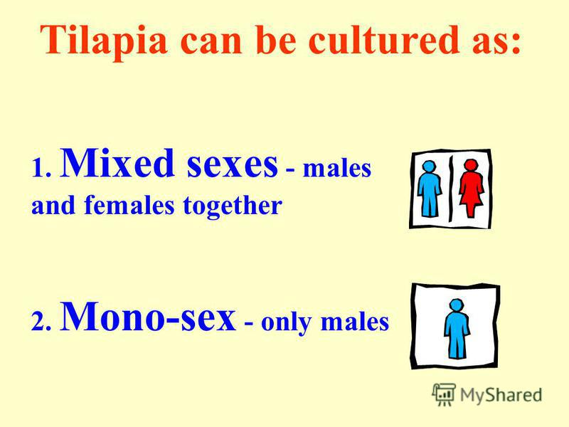 Tilapia can be cultured as: 1. Mixed sexes - males and females together 2. Mono-sex - only males