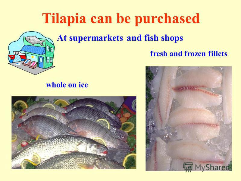 Tilapia can be purchased At supermarkets and fish shops whole on ice fresh and frozen fillets