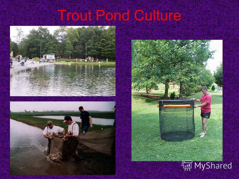 Trout Pond Culture