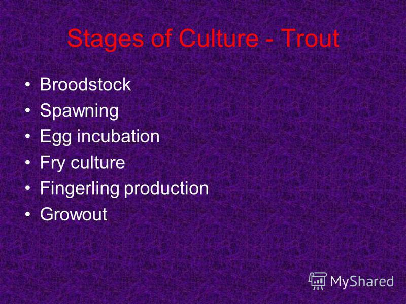 Stages of Culture - Trout Broodstock Spawning Egg incubation Fry culture Fingerling production Growout