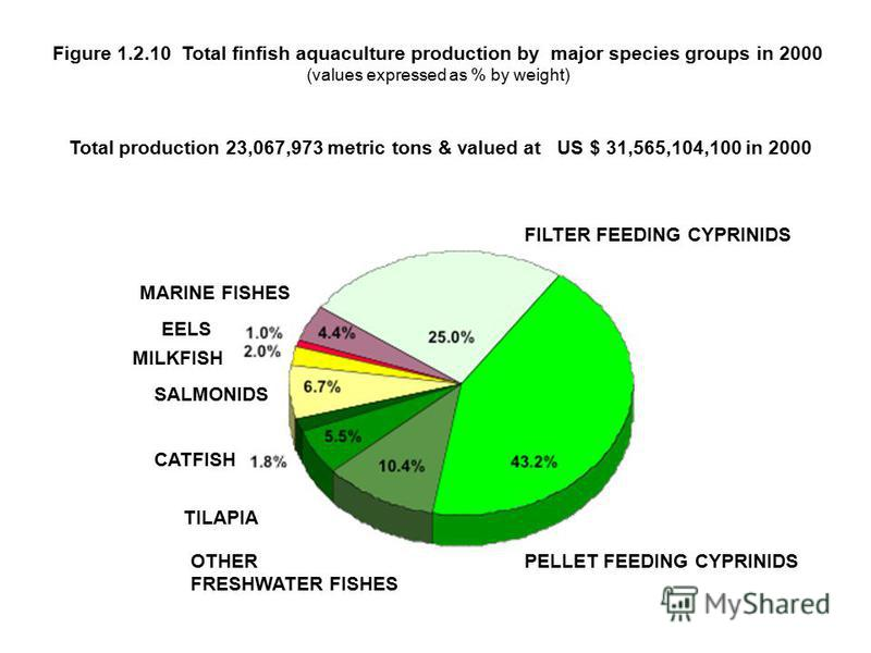 Total production 23,067,973 metric tons & valued at US $ 31,565,104,100 in 2000 FILTER FEEDING CYPRINIDS PELLET FEEDING CYPRINIDS OTHER FRESHWATER FISHES SALMONIDS TILAPIA MARINE FISHES CATFISHES MILKFISH EELS Figure 1.2.10 Total finfish aquaculture