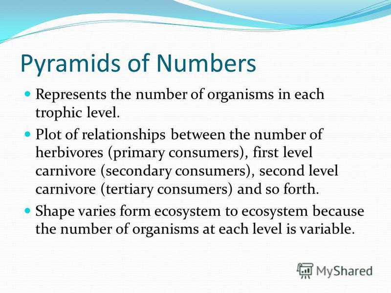 Pyramids of Numbers Represents the number of organisms in each trophic level. Plot of relationships between the number of herbivores (primary consumers), first level carnivore (secondary consumers), second level carnivore (tertiary consumers) and so