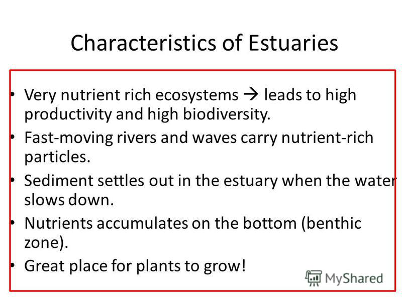 Characteristics of Estuaries Very nutrient rich ecosystems leads to high productivity and high biodiversity. Fast-moving rivers and waves carry nutrient-rich particles. Sediment settles out in the estuary when the water slows down. Nutrients accumula
